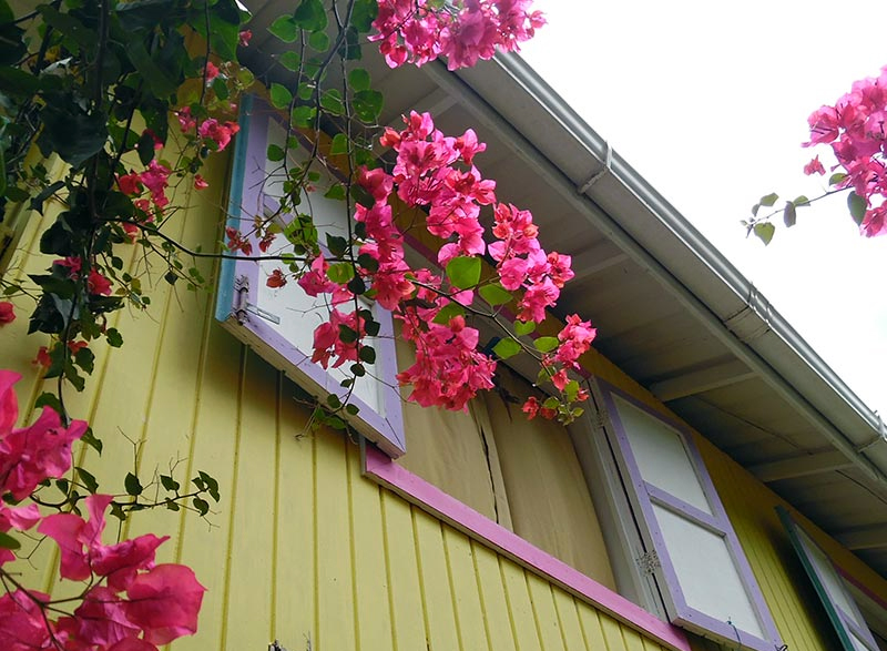 Flores de entrada